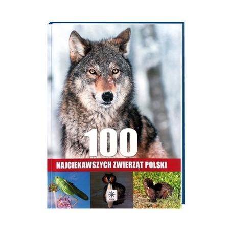 100 najciekawszych zwierząt Polski : Album : Książka