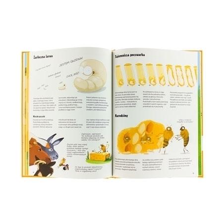 Larwa, poczwarka, pszczoła  : Wszystko o pszczołach - zawartość książki