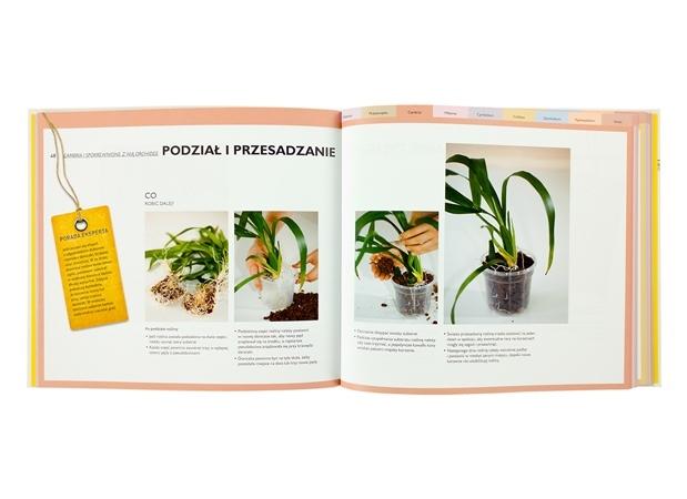 Orchidee. Porady eksperta