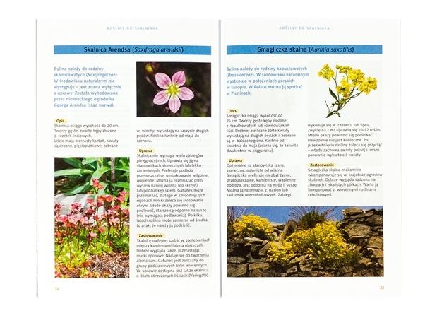 Rośliny na skalniaki - zawartość