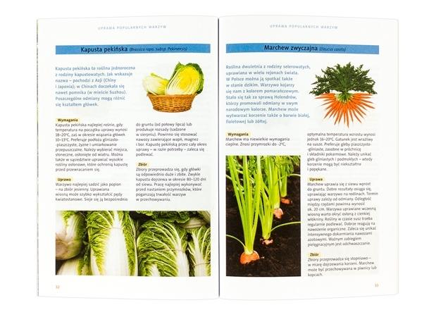 Warzywa w ogrodzie : zawartość poradnika