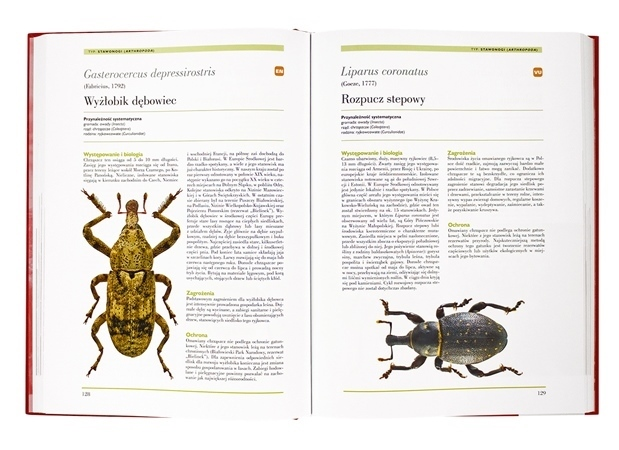 Wyżłobik dębowiec, rozpucz stepowy - Polska księga zwierząt. Gatunki zagrożone - Atlas