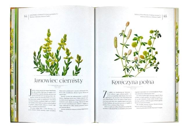 Janowiec ciernisty i koniczyna polna - W ogrodzie Maryi. Atlas roślin maryjnych