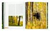 Łoś w polskim lesie - Polski las - Joanna Kapusta, Piotr Kapusta : Atlas