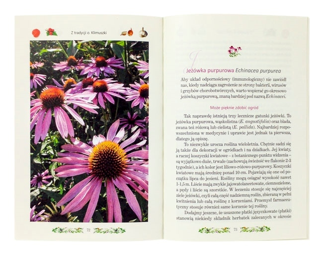 Jeżówka purpurowa - Naturalne antybiotyki z Bożej apteki - Zbigniew T. Nowak