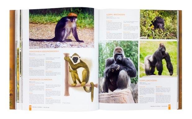 Ssaki świata. Szczegółowe opisy 800 gatunków - Kamila Twardowska, Jacek Twardowski : Album