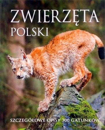 Zwierzęta polski. Szczegółowe opisy 300 gatunków : Album