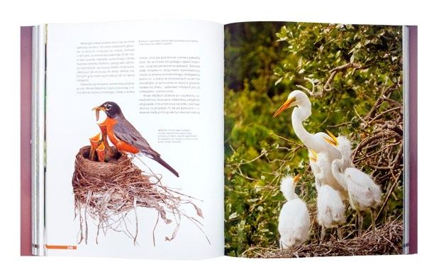 Życie ptaków - Jan Król : Album
