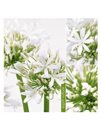 Serwetki ozdobne - Białe kwiatki